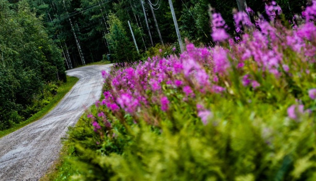 WRC | Dopo la cancellazione del Rally Finlandia, cosa resta del campionato Junior 2020?