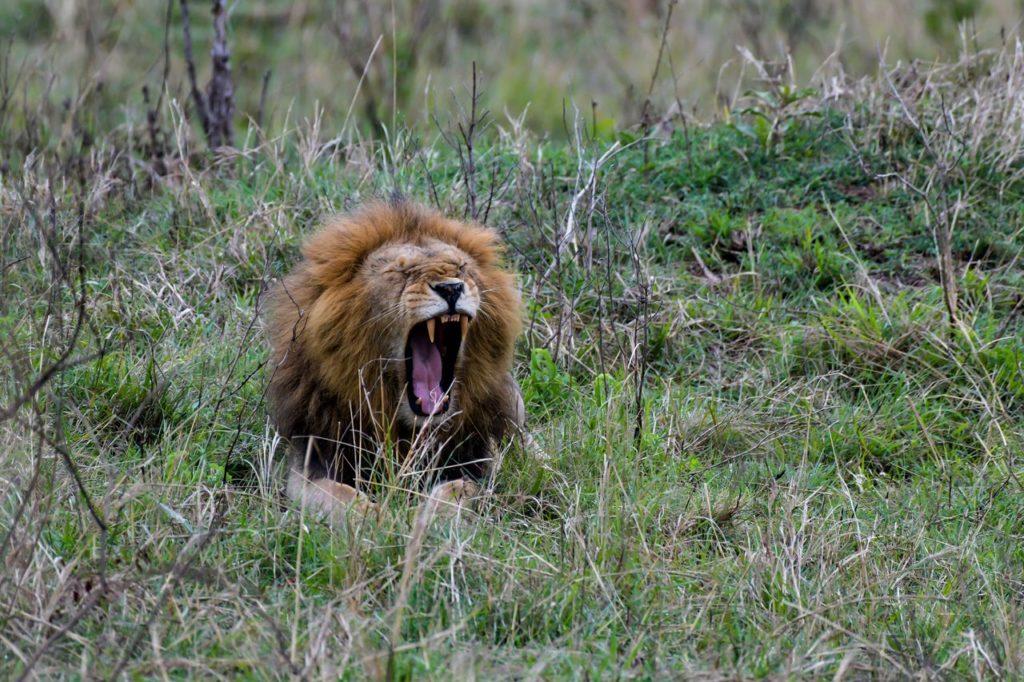 WRC | Safari Rally, le misure per rispettare la fauna locale ed evitare rischi per la sicurezza